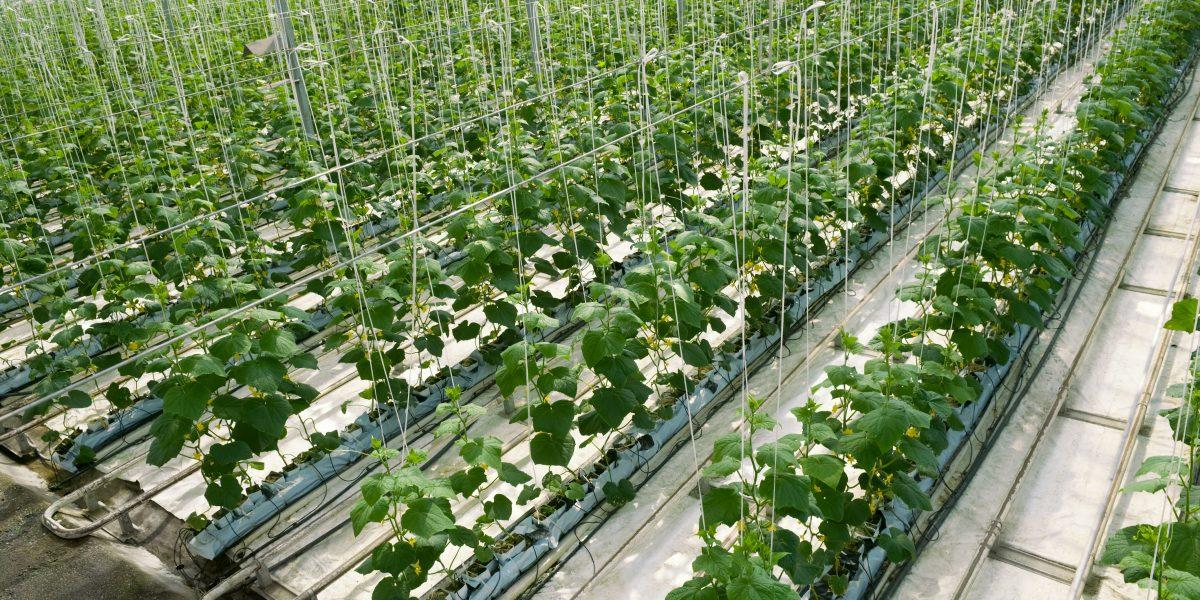 Horticultural Coir Inc.